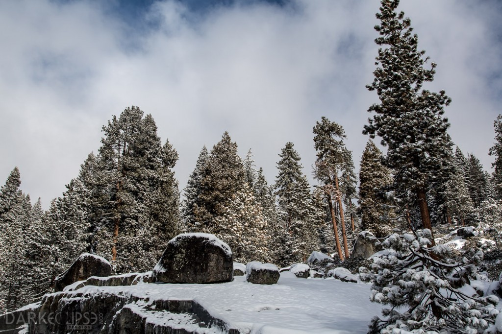 SEQUOIA NATIONAL PARK MORNING SNOW-7888