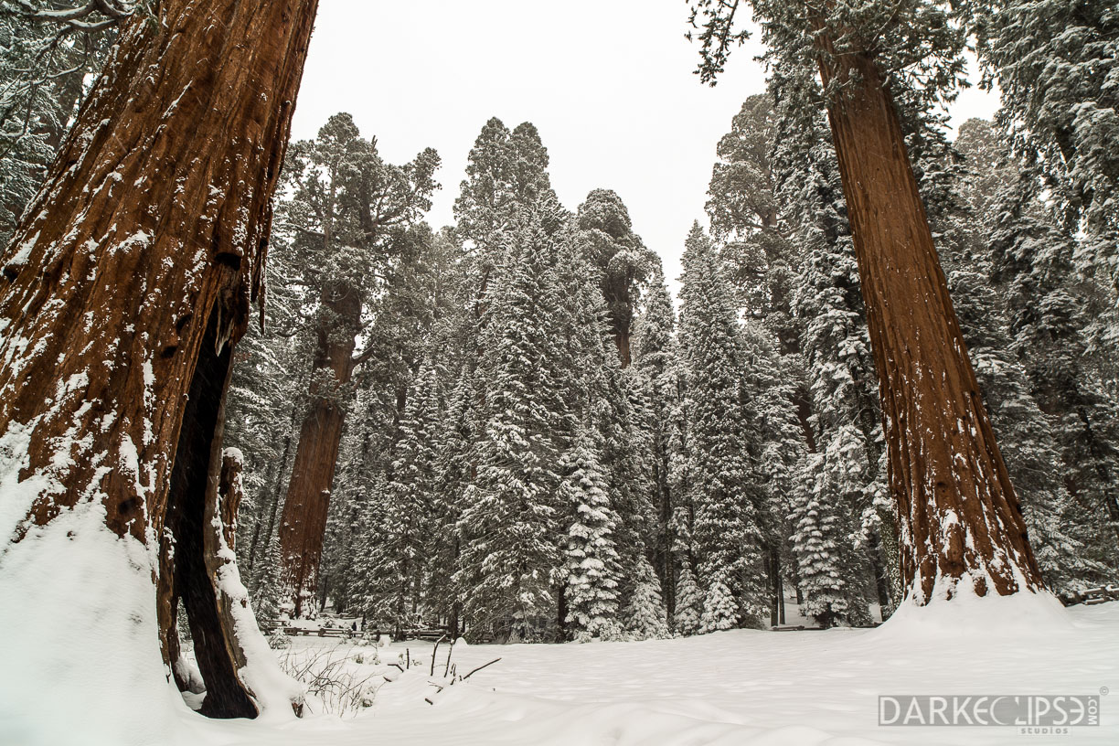 sequoia national park dating Sequoia national park single catholic women interested in dating and making new friends use zoosk most people are just too busy with work to spend much time to go out trying to meet people online dating makes it easy.