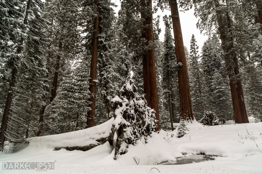 SEQUOIA NATIONAL PARK MORNING SNOW-7961